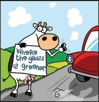 cow_green